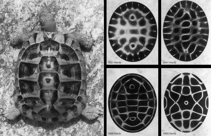 tortoise wave interference patterns