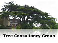 Tree Consultancy Group